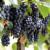 Błyskawiczna dieta winogronowa